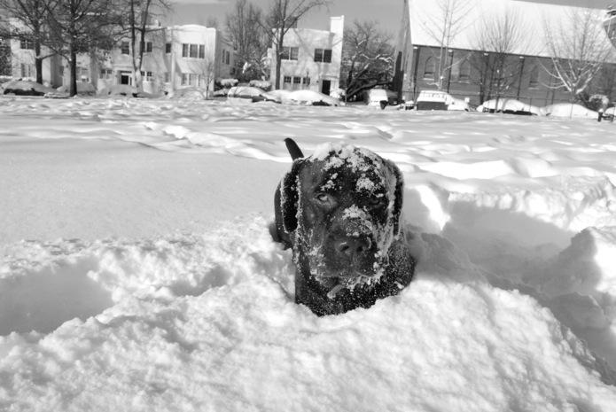 Java_Let it Snow_DC_01