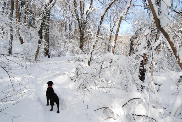 Java_Let it Snow_DC_02