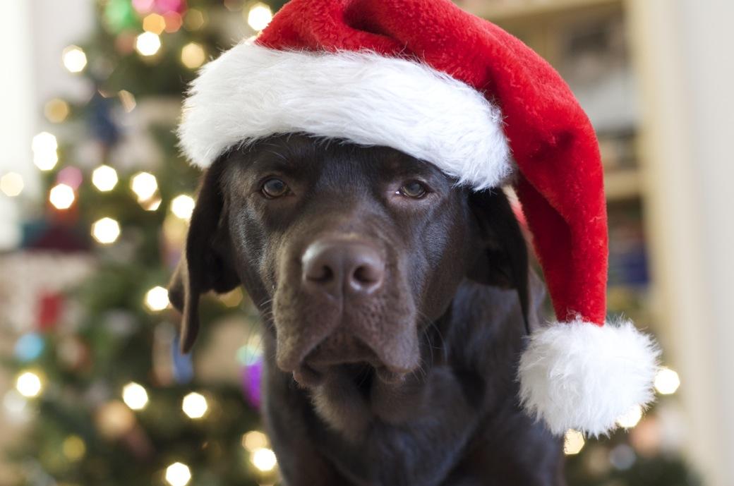 Monster_Merry Christmas