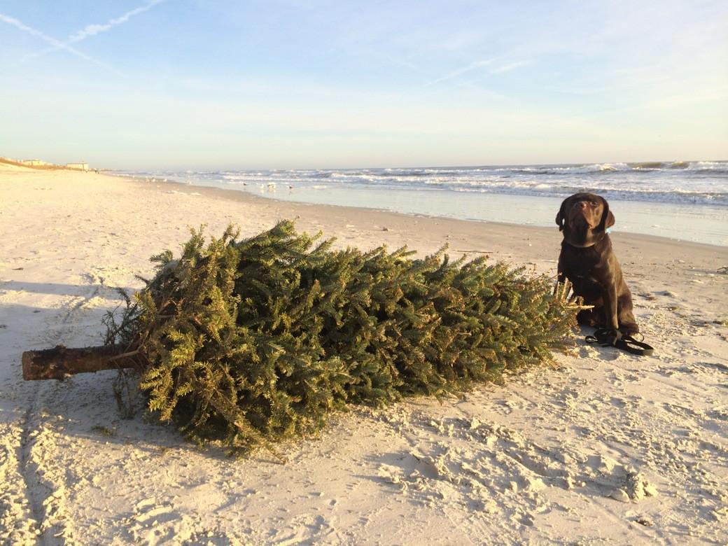 Monster CHristmas Tree